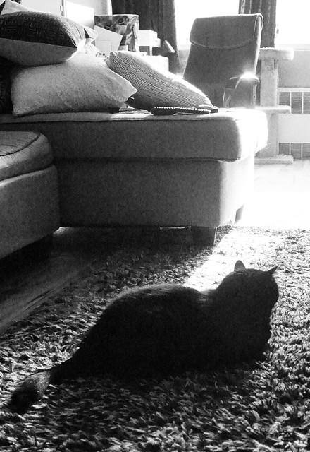 A Cat's Life...