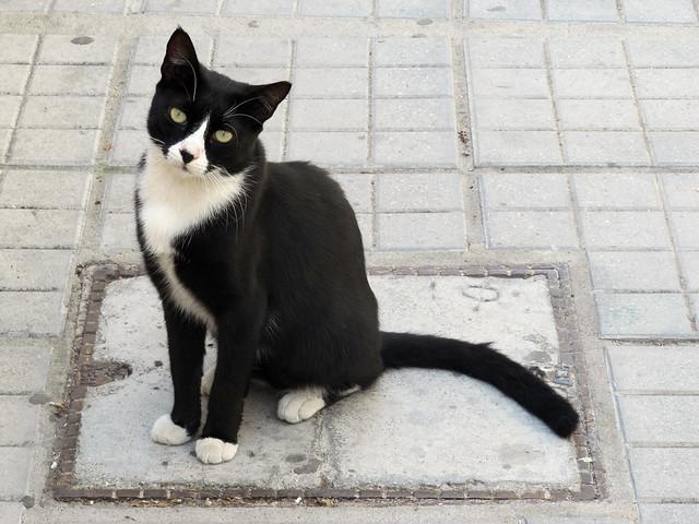 A beautiful neighbour tuxedo princess...