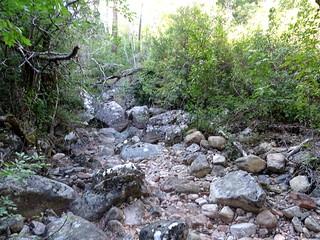 Le ruisseau d'I Scarpi vers l'amont