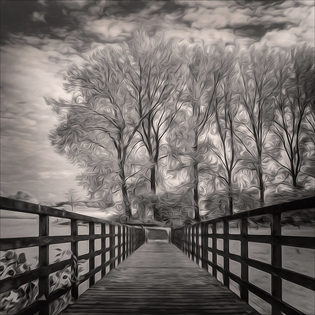 The trees by the bridge