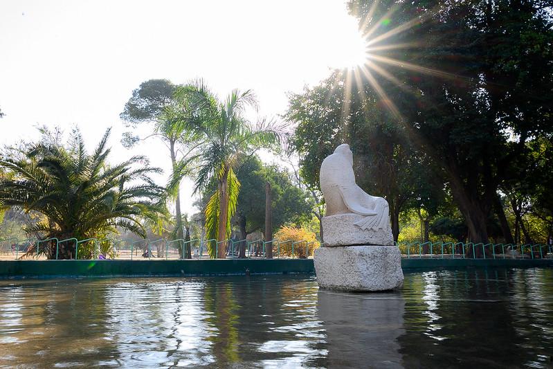 Rosedal Jardín Florido (11)