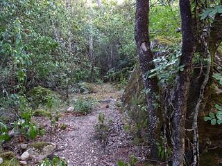 Le sentier d'accès après le ruisseau d'I Scarpi
