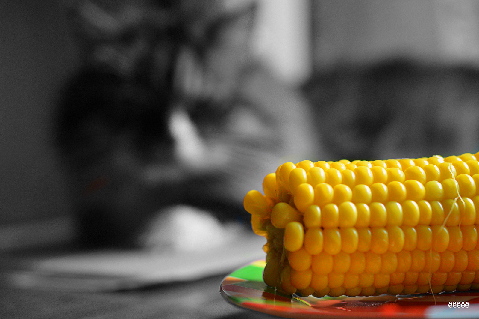 cat and corn