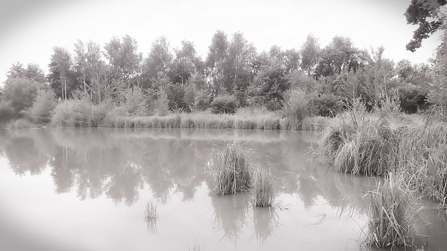 Nature tranquille.