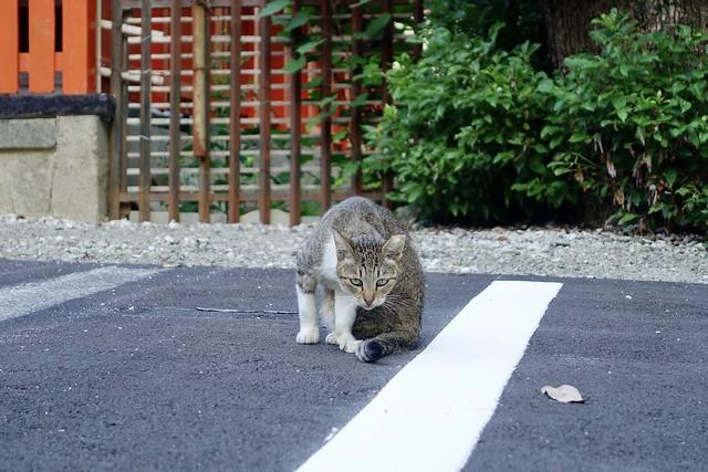 Today's Cat@2020ー09ー01
