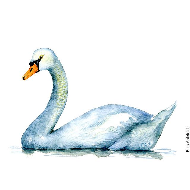 dw00086-watercolor-mute-swan-knopsvane-frits-ahlefeldt