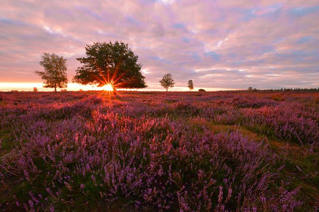 Sunrise over heathland