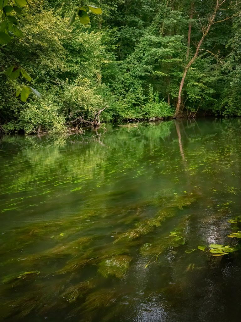 C'est un trou de verdure où chante une rivière... 50295445921_6cda996707_b