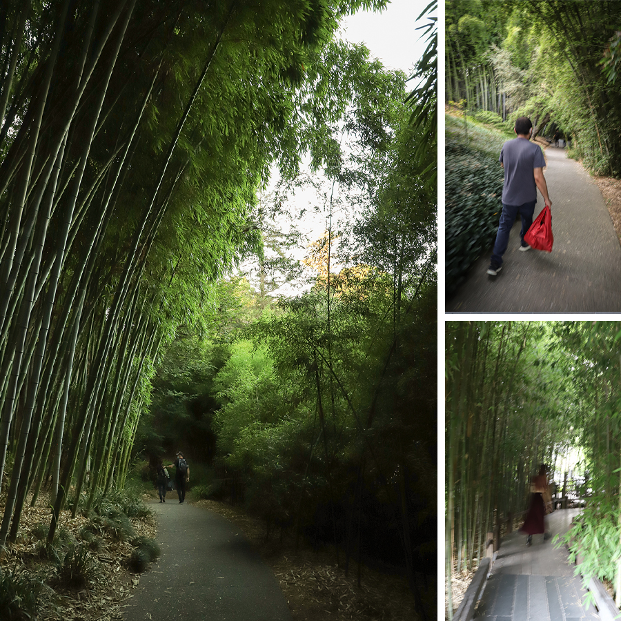 Through-the-bamboo-at-Huntington-Botanical-Gardens