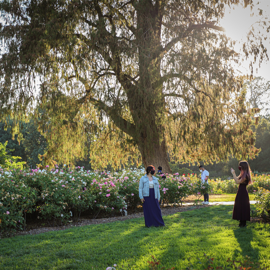 Posing-in-the-Rose-Garden-at-Huntington-Botanical-Gardens