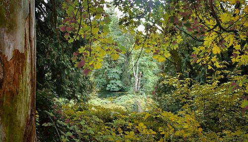 columbiasprings forest trees fall autumn washingtonstate wa washington usa educationcenter vancouver landscape water westbiddlelake lake outdoors