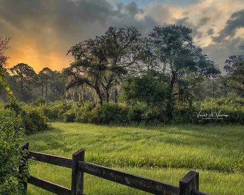 landscape dawn fantasticnature florida myakka visionsbyvincent