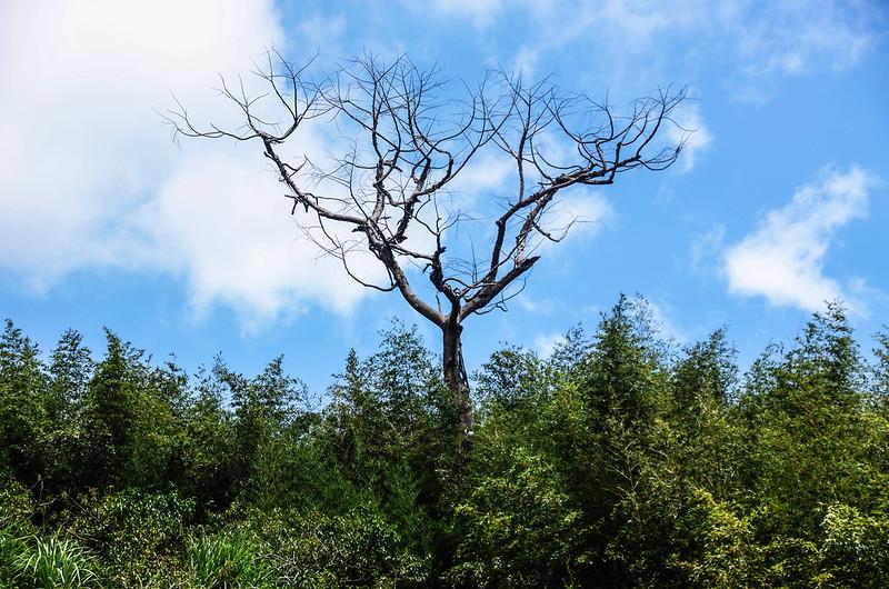 西砂埔鹿山山景 (2)