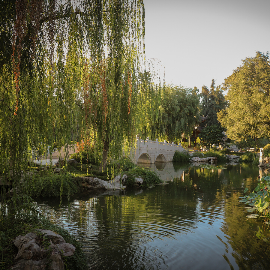 Chinese-Garden-at-Huntington-Botanical-Gardens-3