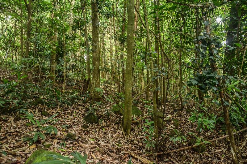 西橫龍山寬稜雜木林
