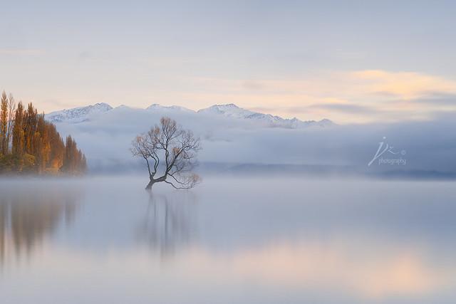 Wanaka Tree in Fog