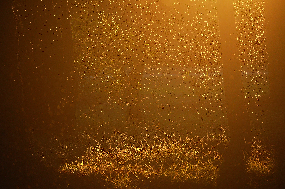 _autumn_flies_2_