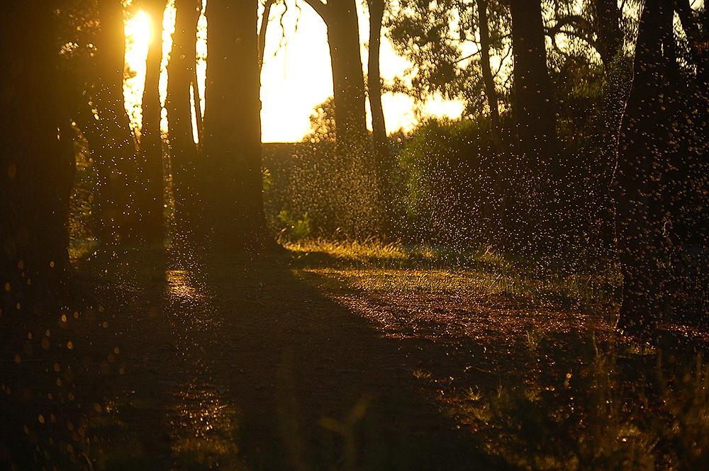 _autumn_flies_