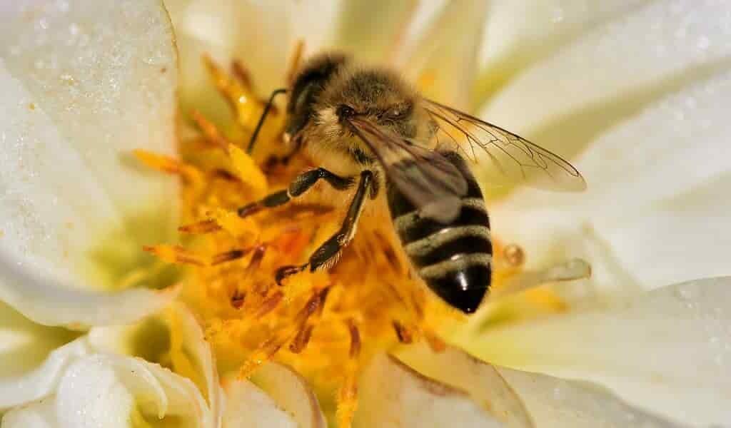 les-abeilles-calculent-la-probabilité-pour-se-nourrir