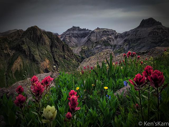 Governor Basin Wildflowers