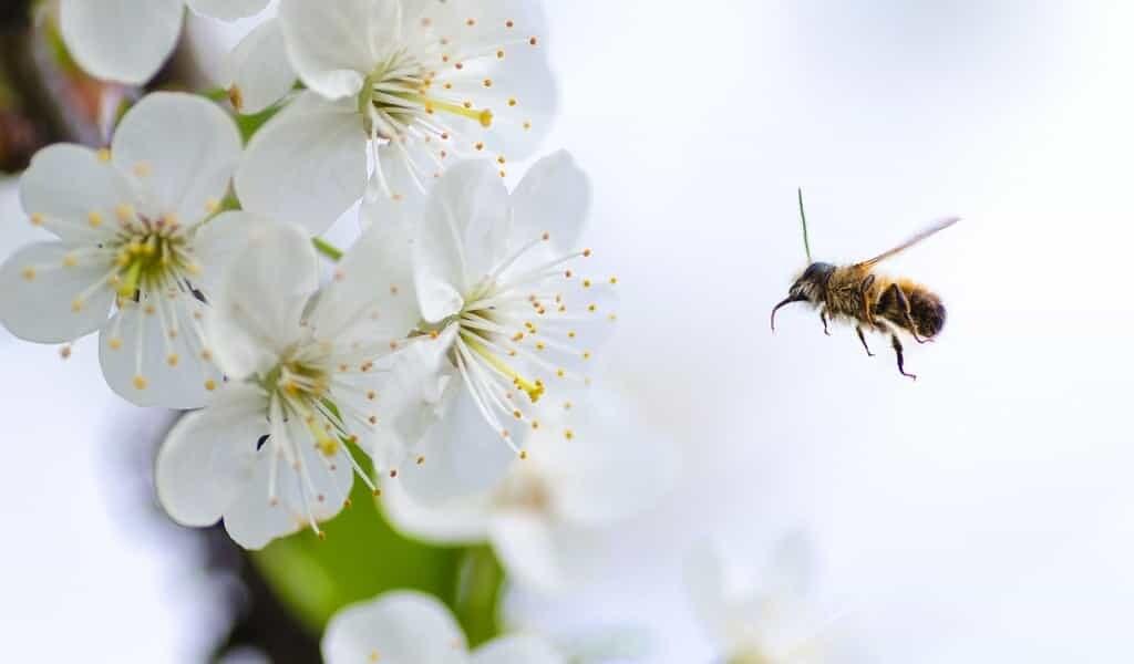 le-venin-des-abeilles-contre-le-cancer-du-sein