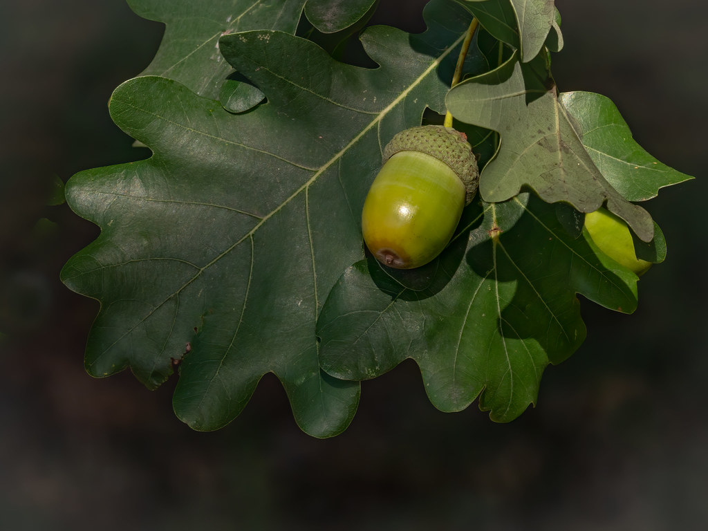 """Glander"" au soleil d'automne... 50298331082_a69f3a9609_b"