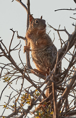 rabbit reptile squirrel harrisshawk flower gambelsquailchicks landscapes mountains scenicnature sunrise bird birds nature
