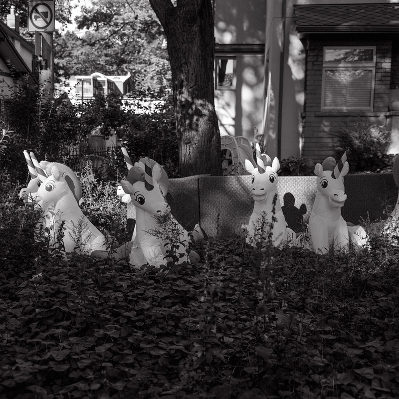 Unicorns in the Front Yard