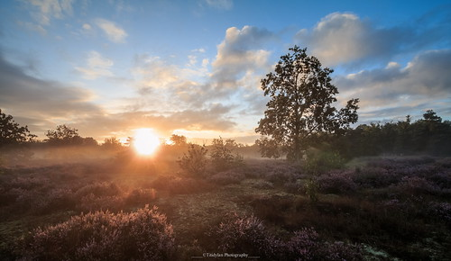 outdoors nature sky tree landscape scenery scenics tranquil scene beauty in sunlight tranquility sunset nonurban cloud sun kesselse heide belgium