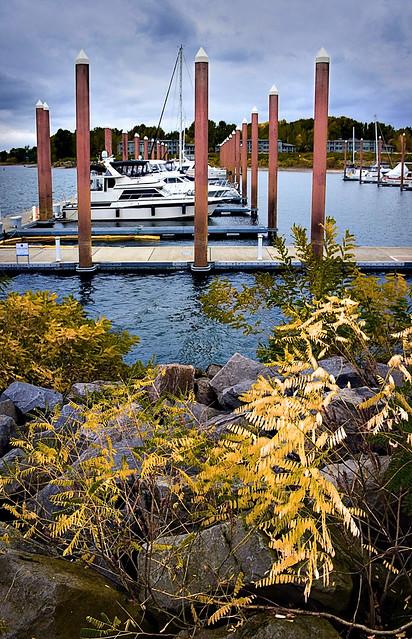 Tidewater Cove Marina