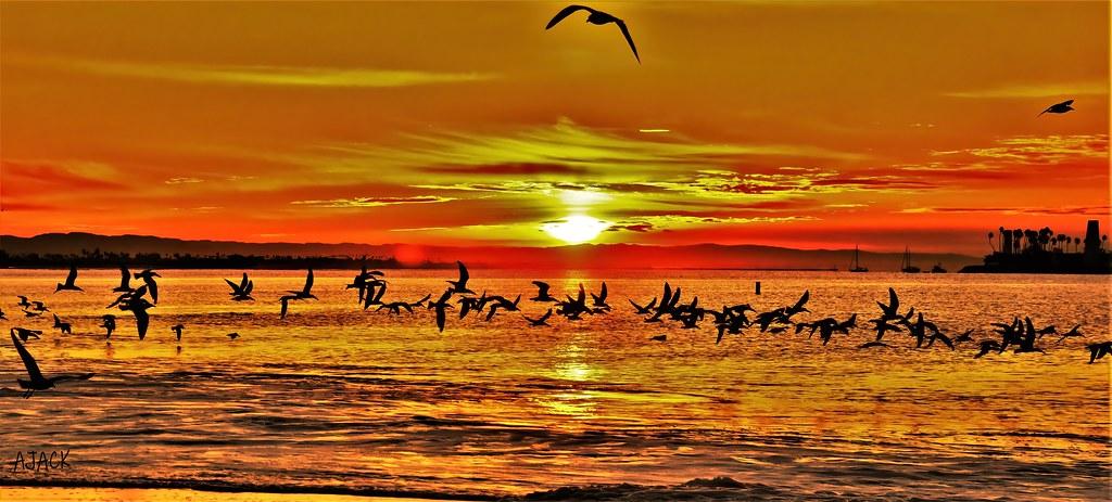 Sunrise, Birds, Alamitos Bay--explore