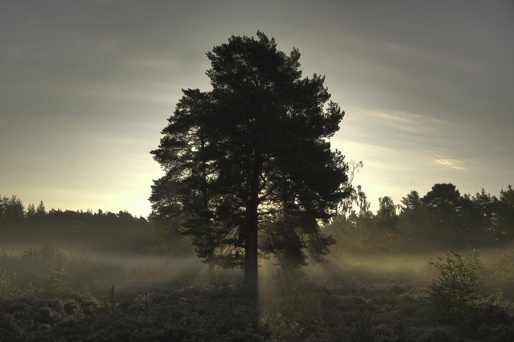 Return to Tuesday's Tree