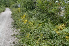 The Dynamite Trail