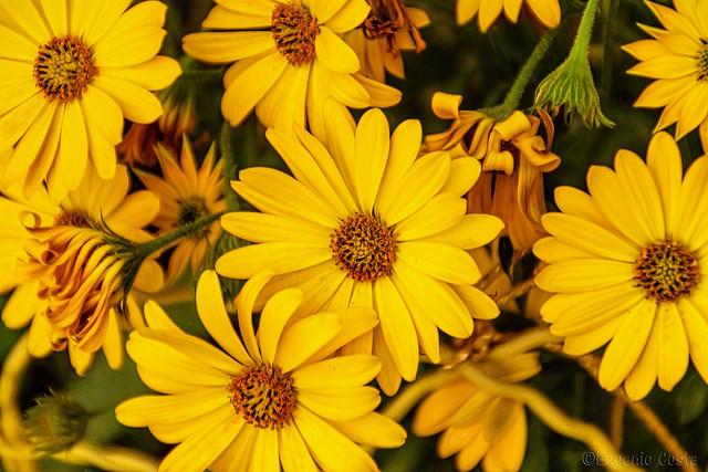 A ciascun fiore il suo colore - To each flower its color