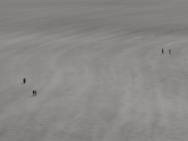 Les fourmis vont aussi à la plage...ants go to the beach too