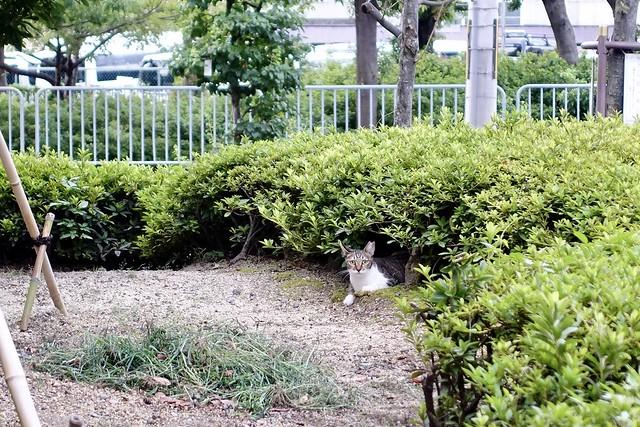 Today's Cat@2020ー09ー03