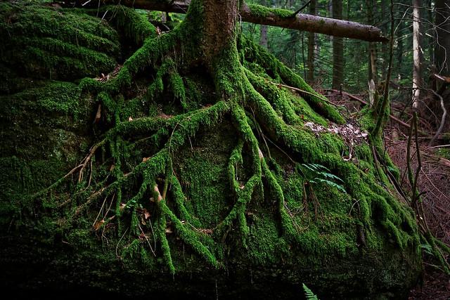 Im Nordschwarzwald