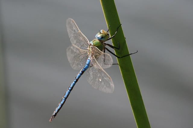 Dragonfly Explore 04/09/2020 Nº 7