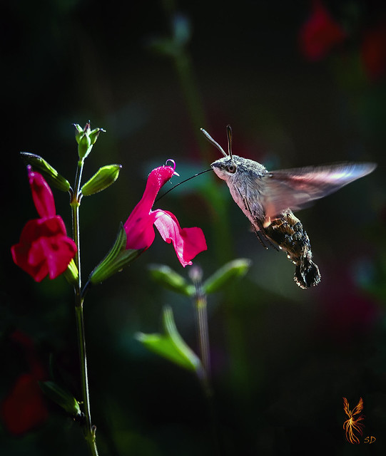 Hovering lunch...