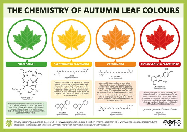 So why don't trees go BLUE in Autumn? 🌈 The Chemicals Behind the Colours of Autumn Leaves by Andy Brunning / compoundchem.com 🍃🍂