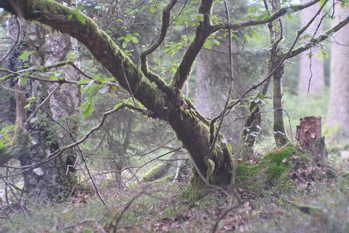 ...tief im Wald