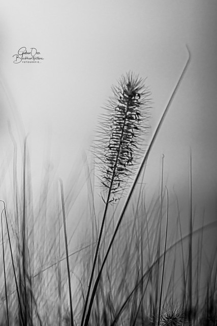 The rustling in the reeds