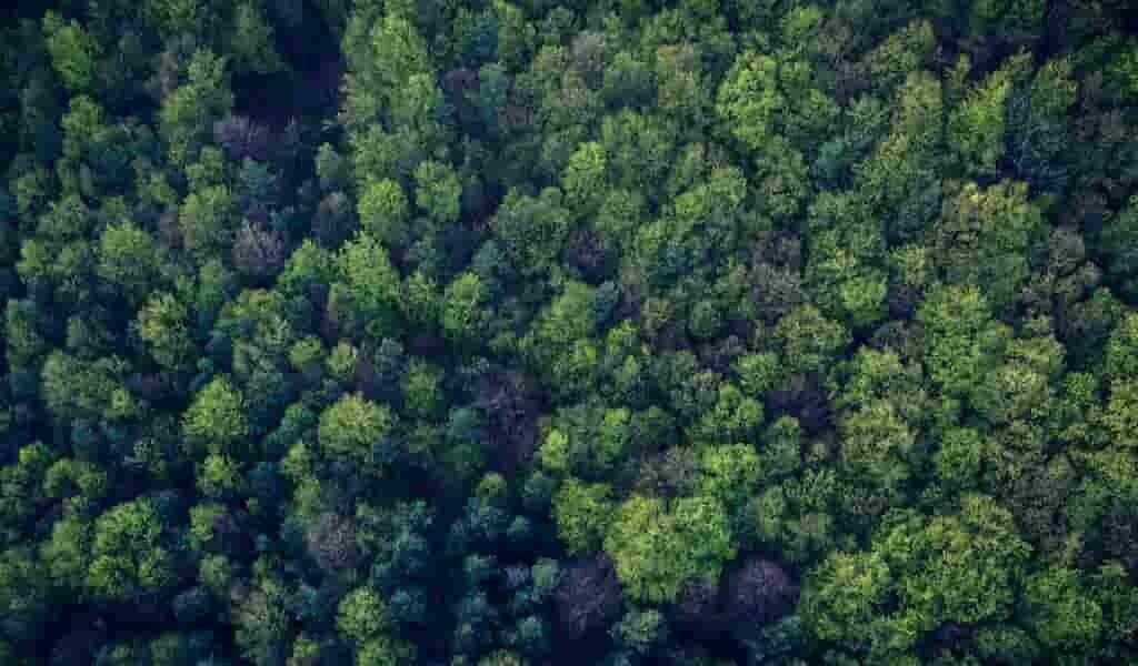 la-décomposition-des-corps-révélée-par-les-arbres