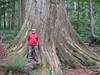 Old Growth Western Red Cedar by D-Stanley