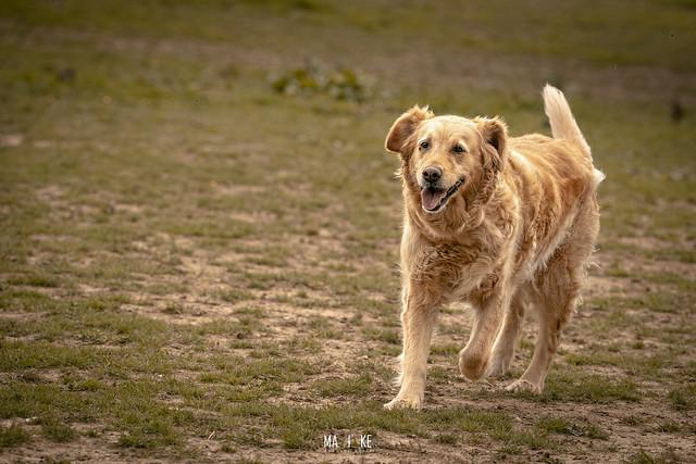 Filou_dogsandCo-4