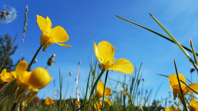 Beautiful sunny spring 15