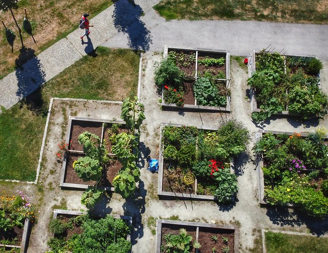 Community Gardens at City Hall