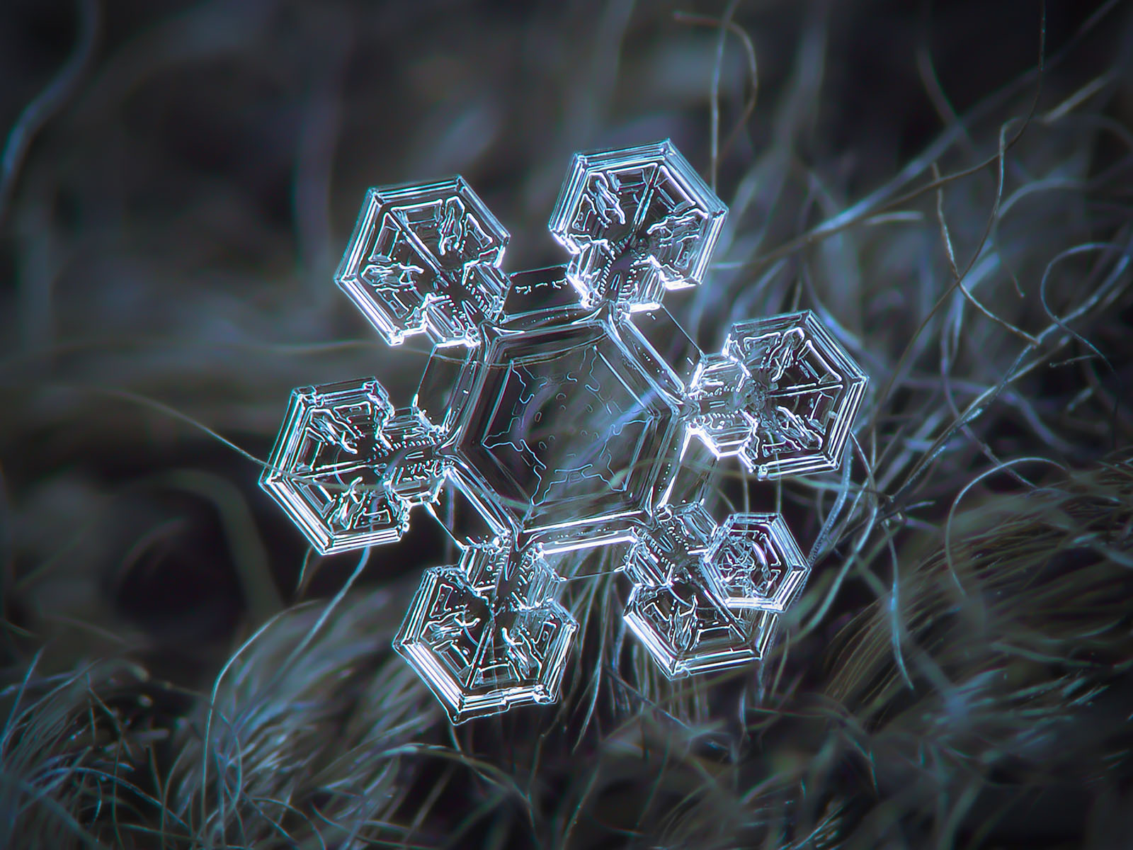 Snowflake image: Icy jewel, real snow crystal with broad arms and complex inner pattern, glittering on dark background