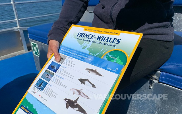 Prince of Whales tour-5