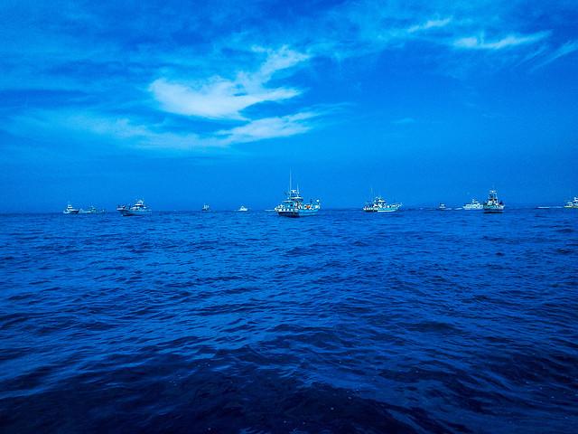 キハダ船団。